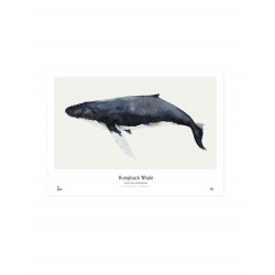 AFFICHE BALEINE MY DEER ART SHOP