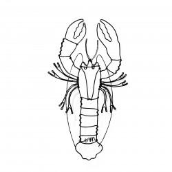 homard en fil de fer