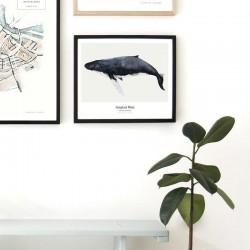 affiche whale my deer art shop