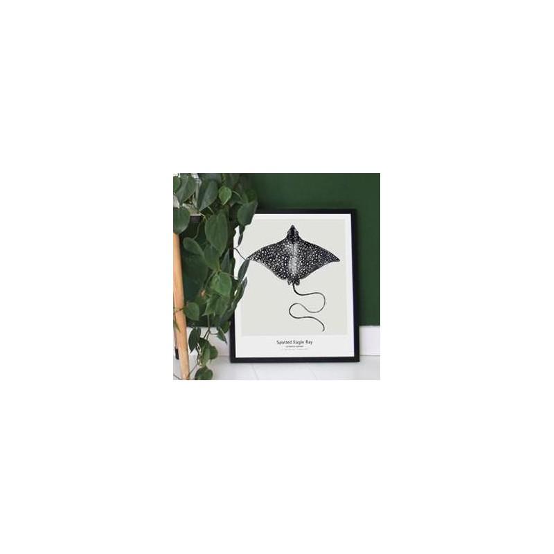 affiche raie aigle